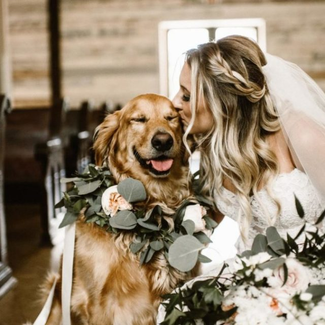 Tips for Including Animals in Your Wedding https://weddingery.com